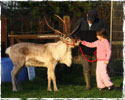 Reindeer8.jpg